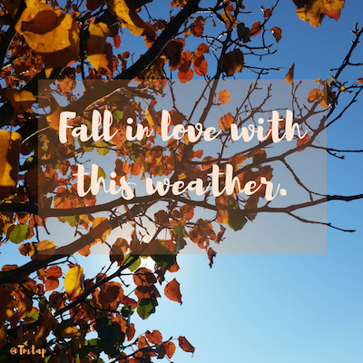Edited fall photo with Canva