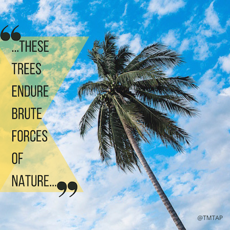 """...these trees endure brute forces of nature..."""