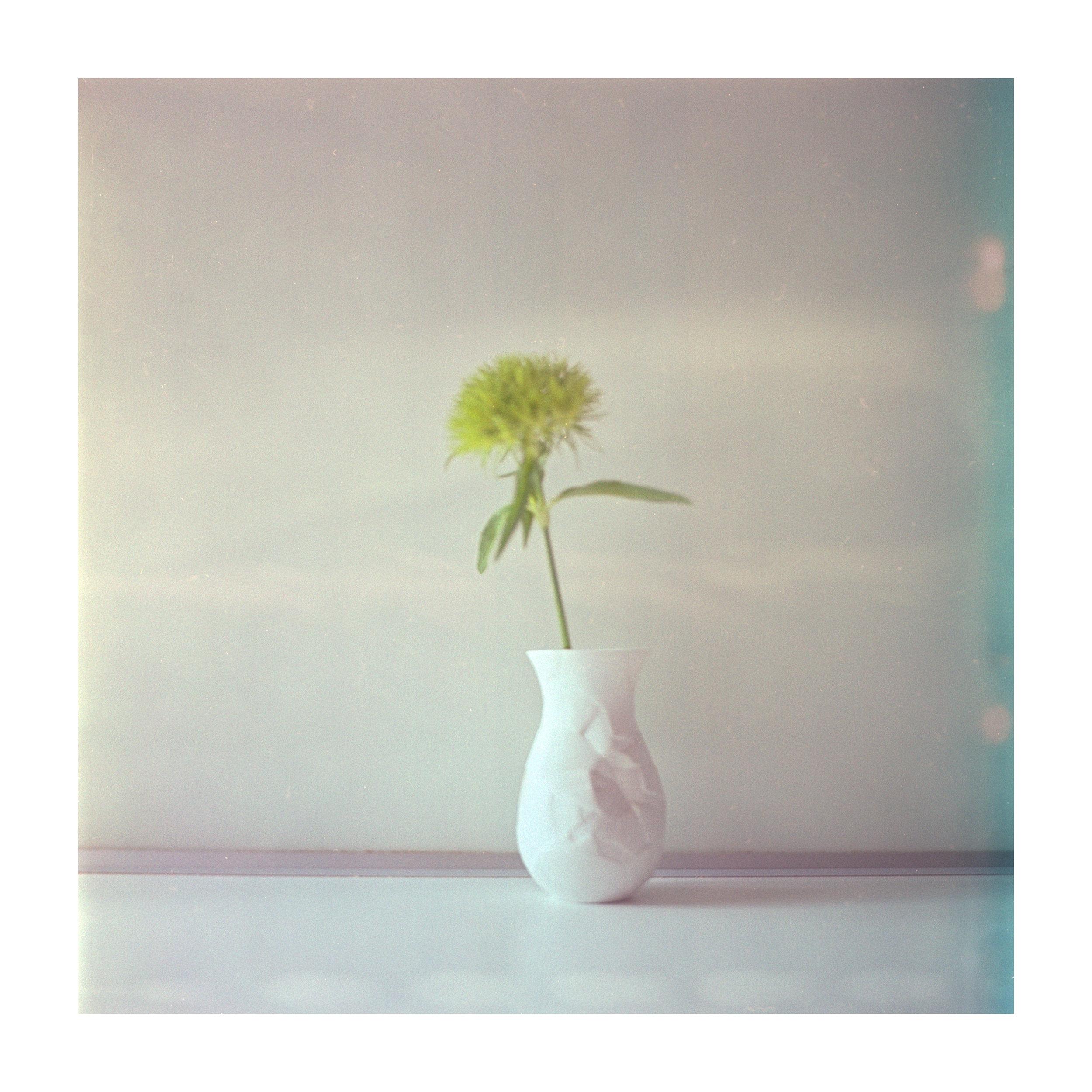 3 Fuji Reala analog georg schmidt photography rolleiflex sl 66-fotografie auf film von georg schmidt.jpg