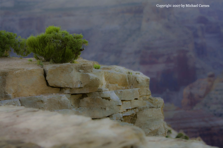Ephedra on the edge of the canyon before sunrise, Wedge Overlook