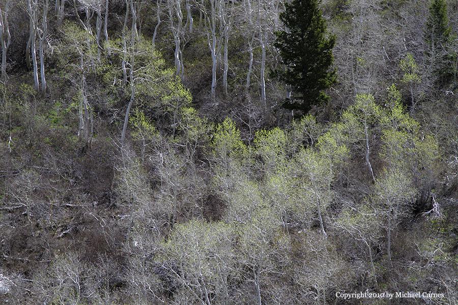 Subtle colors of spring appear below Day's Fork
