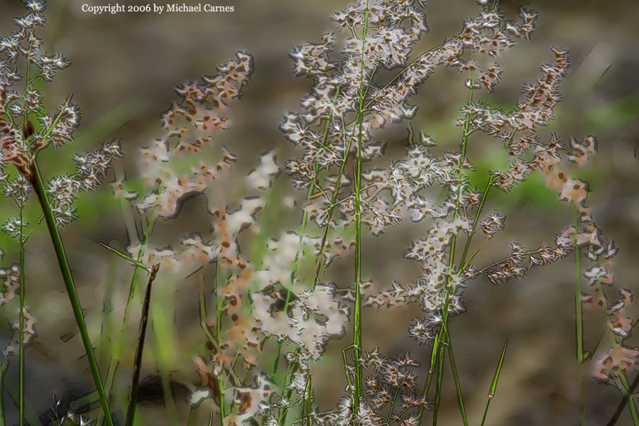Grass fronds on a Big Island pali