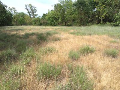 Katchituli grasslands.