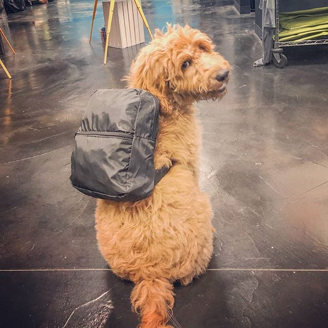 Whoops! Our August Pick if the Month is a little late due to getting this little guy fitted for school! Check out @snoop_doodle_dogg modeling the mini backpack from @gemlineproducts 🤗 Also the perfect summer to fall accessory for day trips. 🎒🐶😎