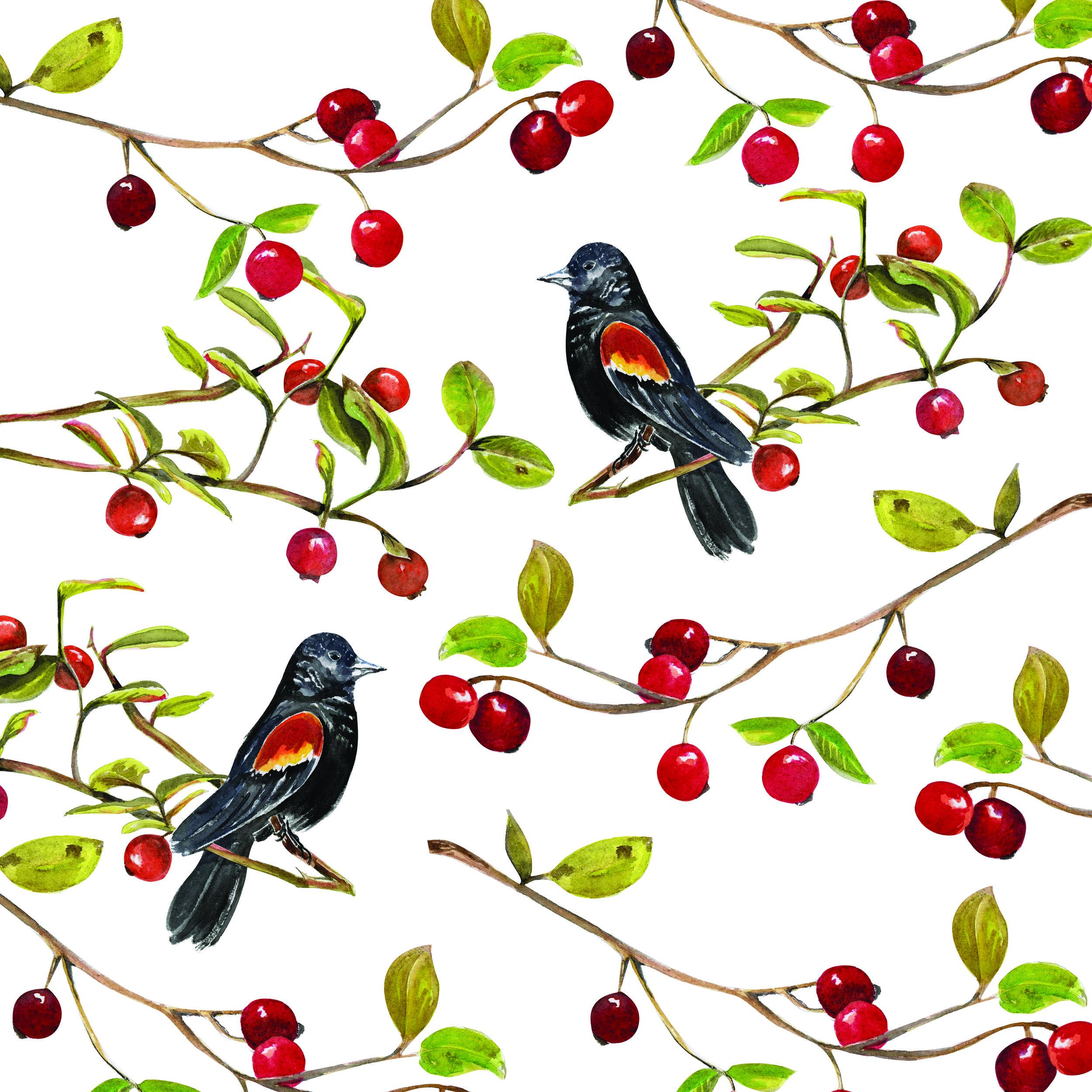 blackbird18x18adaptive.jpg