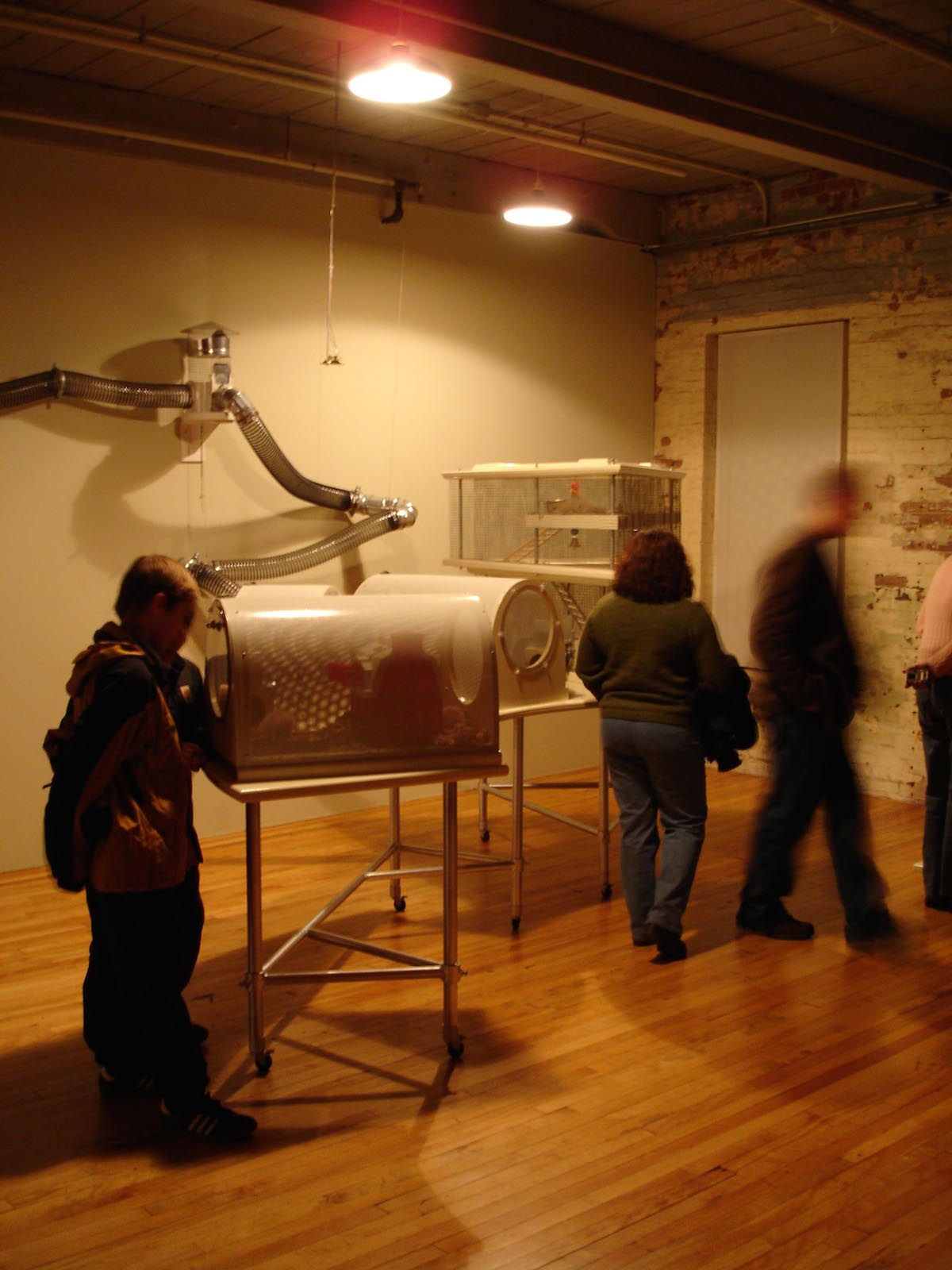 Kathy High, Embracing Animal (2004-2006), mixed media installation including 3 live transgenic rats (reproduced with permission)
