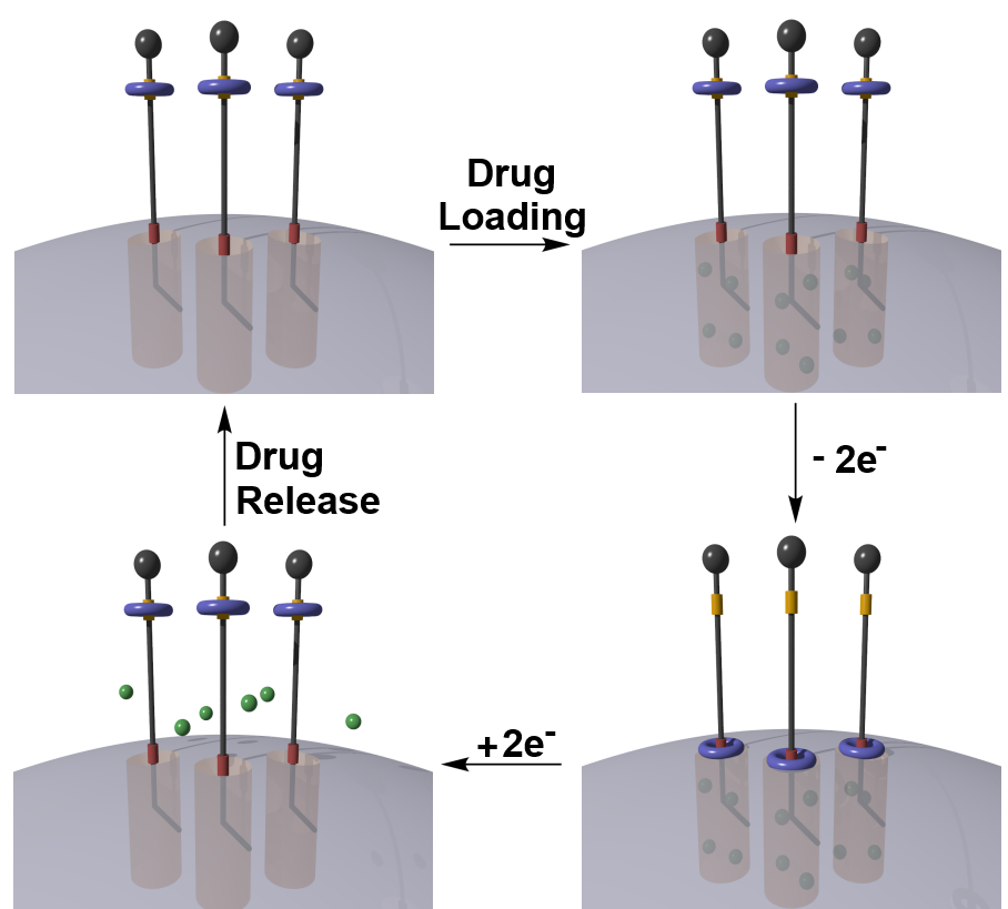 Drug delivery systems can be controlled by nanovalves. The molecular ring (blue) shuttles between the open station (yellow) to the closed station (red) on removal of electrons. In this way, the release of the drug (green) can be controlled.   Image provided by author.