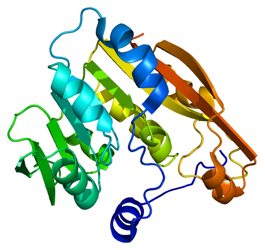 Structure of the TPMT protein.   Emw/Wikimedia Commons  (public domain)