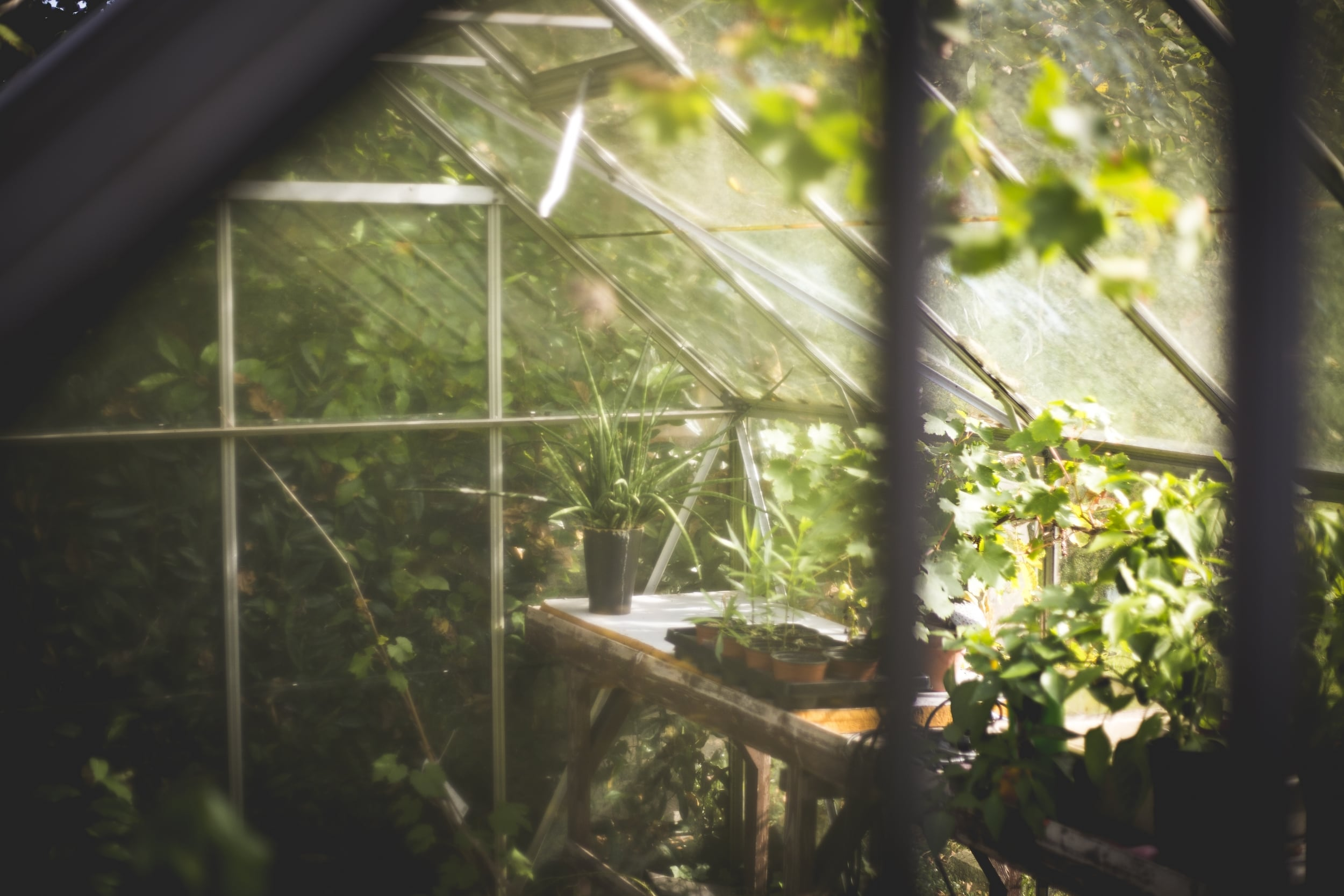 Plants have been turning sunlight into energy for millions of years. What does quantum physics have to do with it?   Thomas Verbruggen/Unsplash  (public domain)