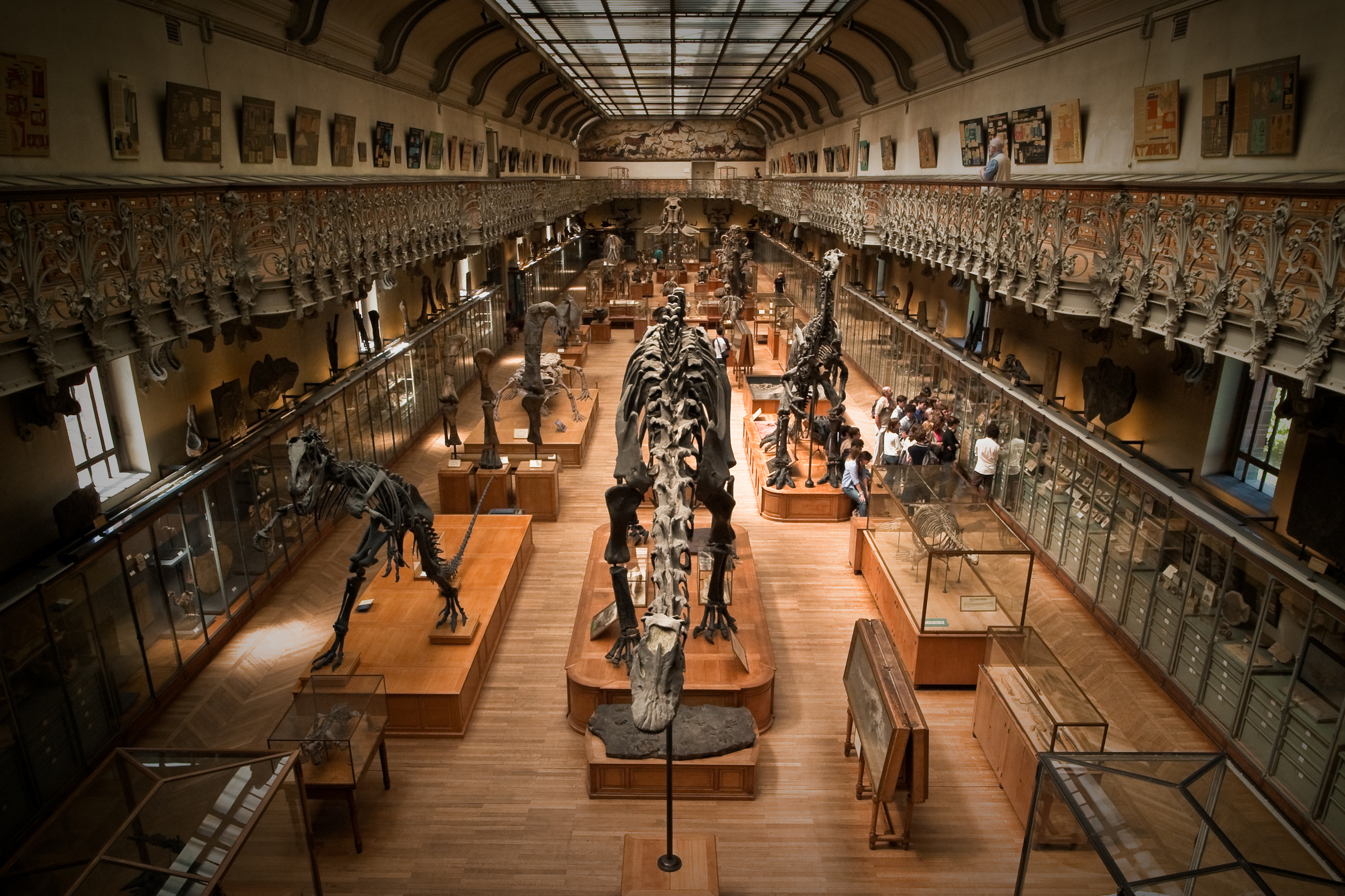 Museum fossil collections are a wonderful opportunity to see species change over millions of years.   Brendan Lynch/Flickr  (CC BY-SA 3.0)