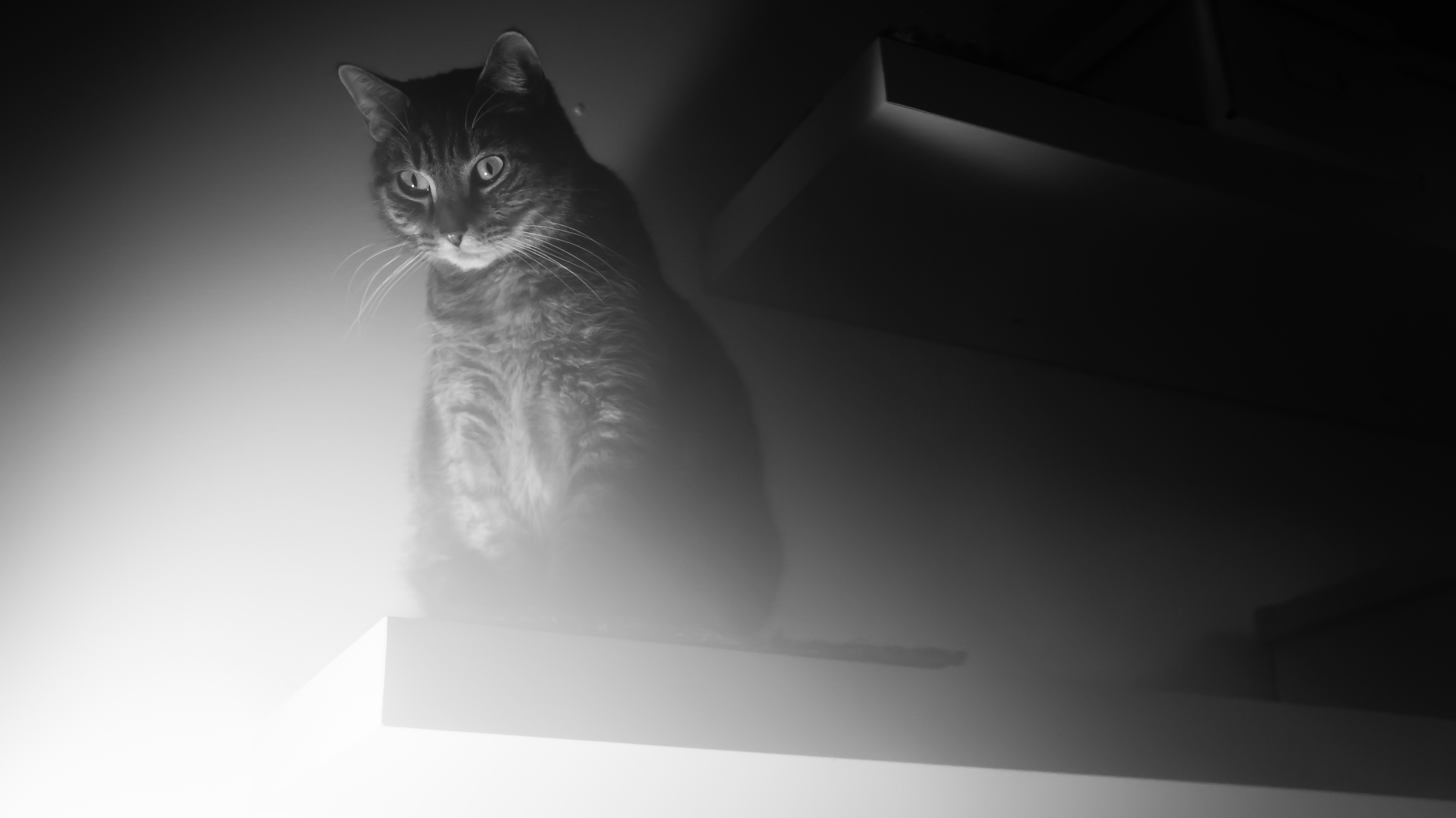 Does life dabble in the spooky world of quantum physics?   Mitchell Wright/Flickr  (CC BY 2.0)