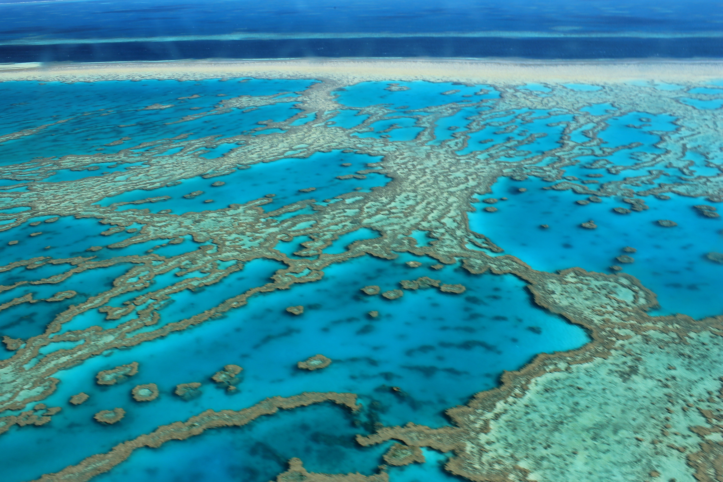 The Great Barrier Reef has experienced bleaching recently, and both major political parties have promised funding for the reef.  FarbenfroheWunderwelt/Flickr  (CC BY-ND)
