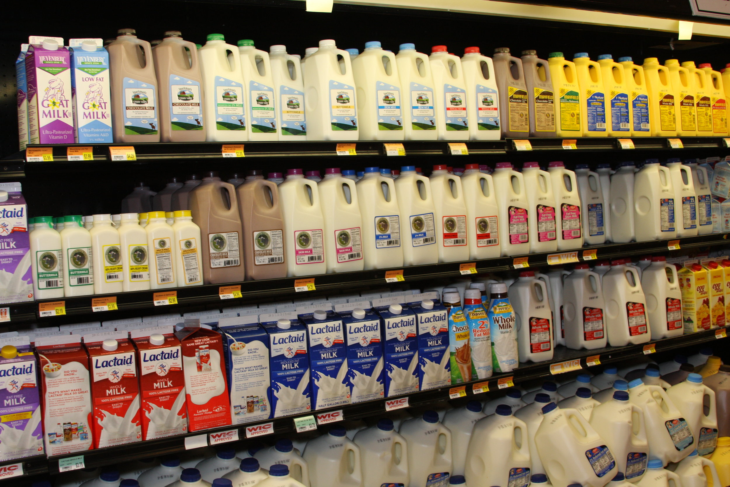 Our modern Western diet, rich in dairy products, took some evolving to get used to.   April Sorrow/Flickr  (CC BY-NC 2.0)