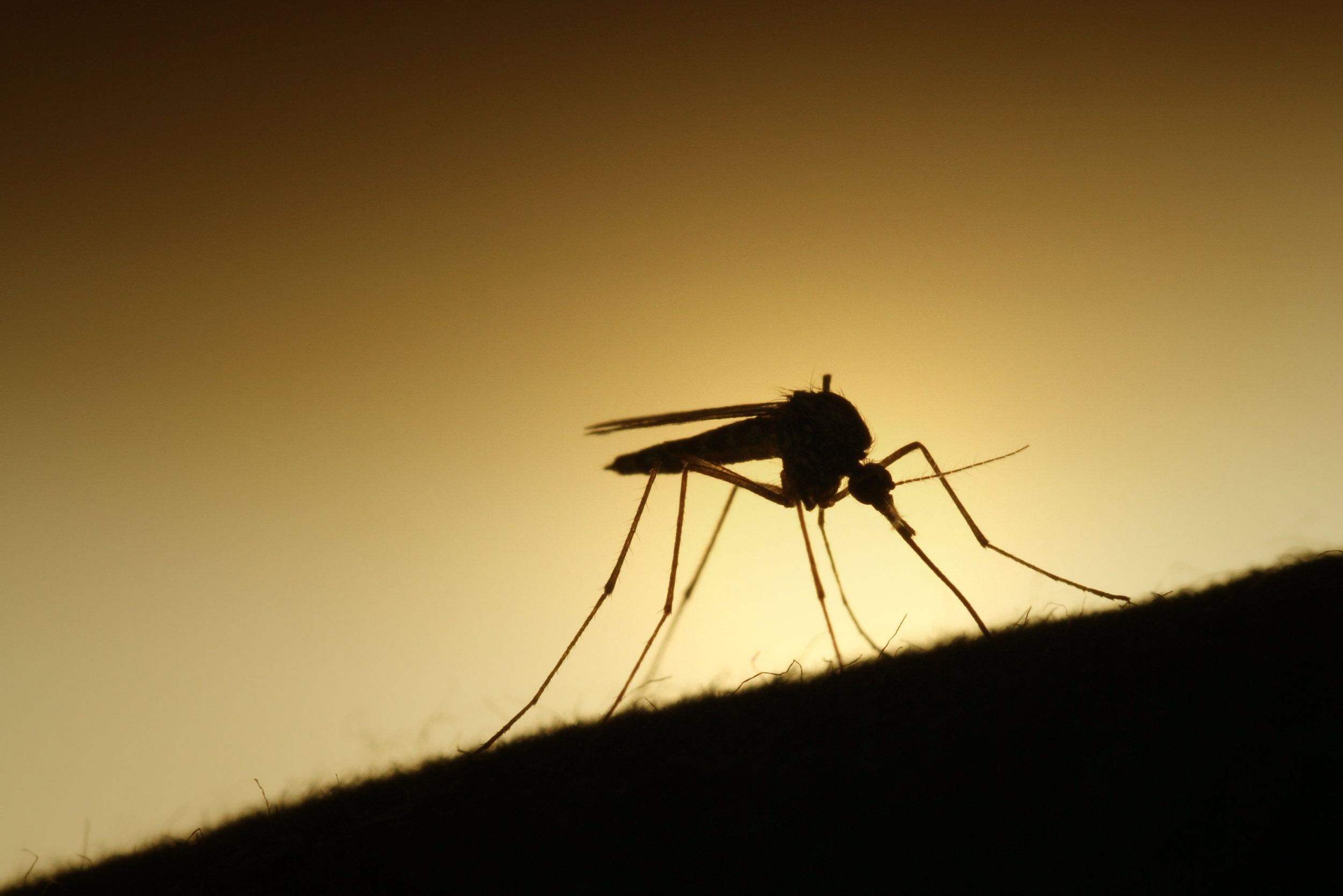 Not everybody is happy about sharing the planet with mosquitoes.   Erik F. Brandsborg/Flickr  (CC BY-SA 2.0)