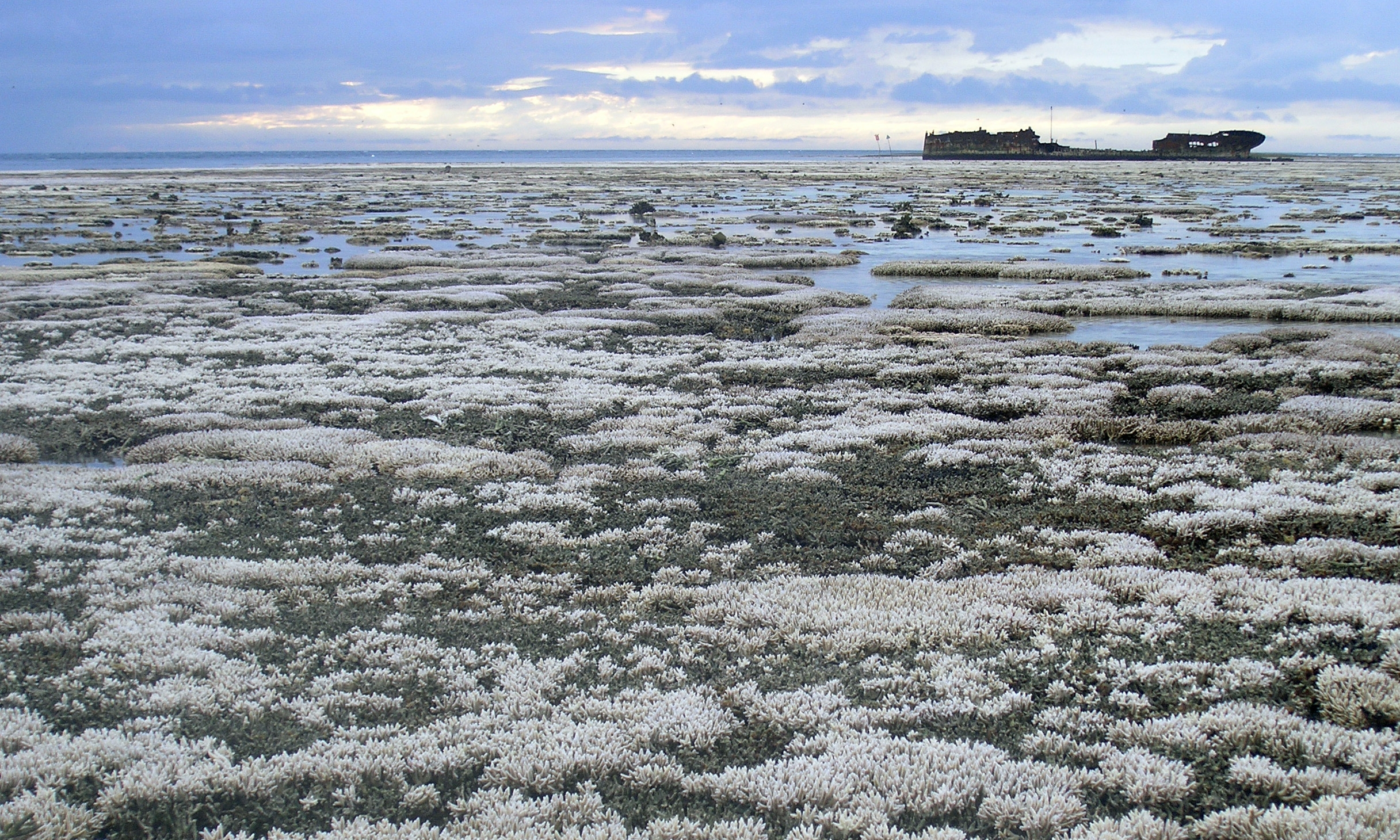 Coral bleaching is a very visible consequence of climate change.   Oregon State University/Flickr  (CC BY-SA 2.0)