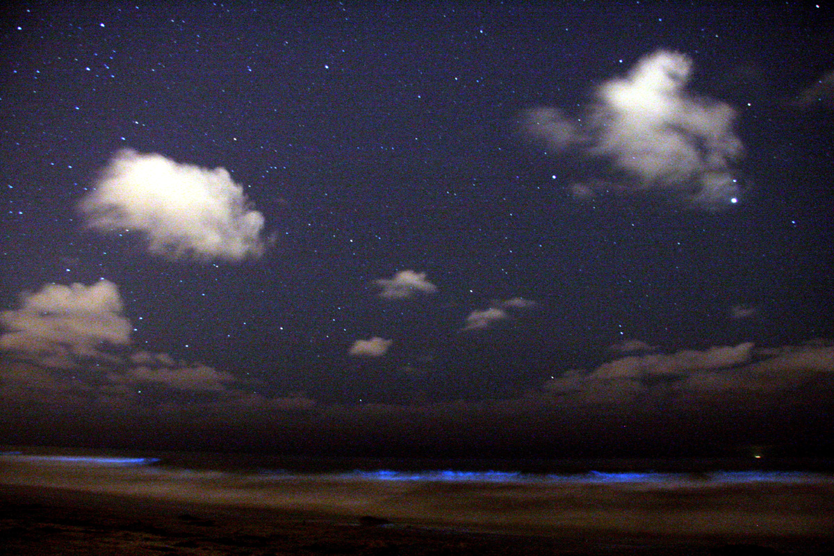 Dinoflagellates glow blue in the surf beneath a night sky.  Mike/  Wikimedia Commons (CC BY-SA 2.0)