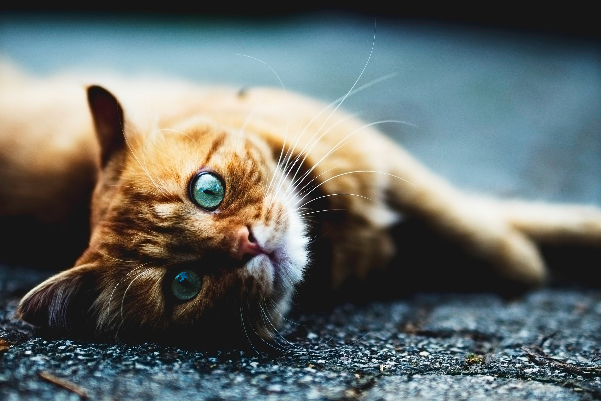 One of many cute kittens to be found on the internet.   Simone Dalmeri/Unsplash  (CC BY0)