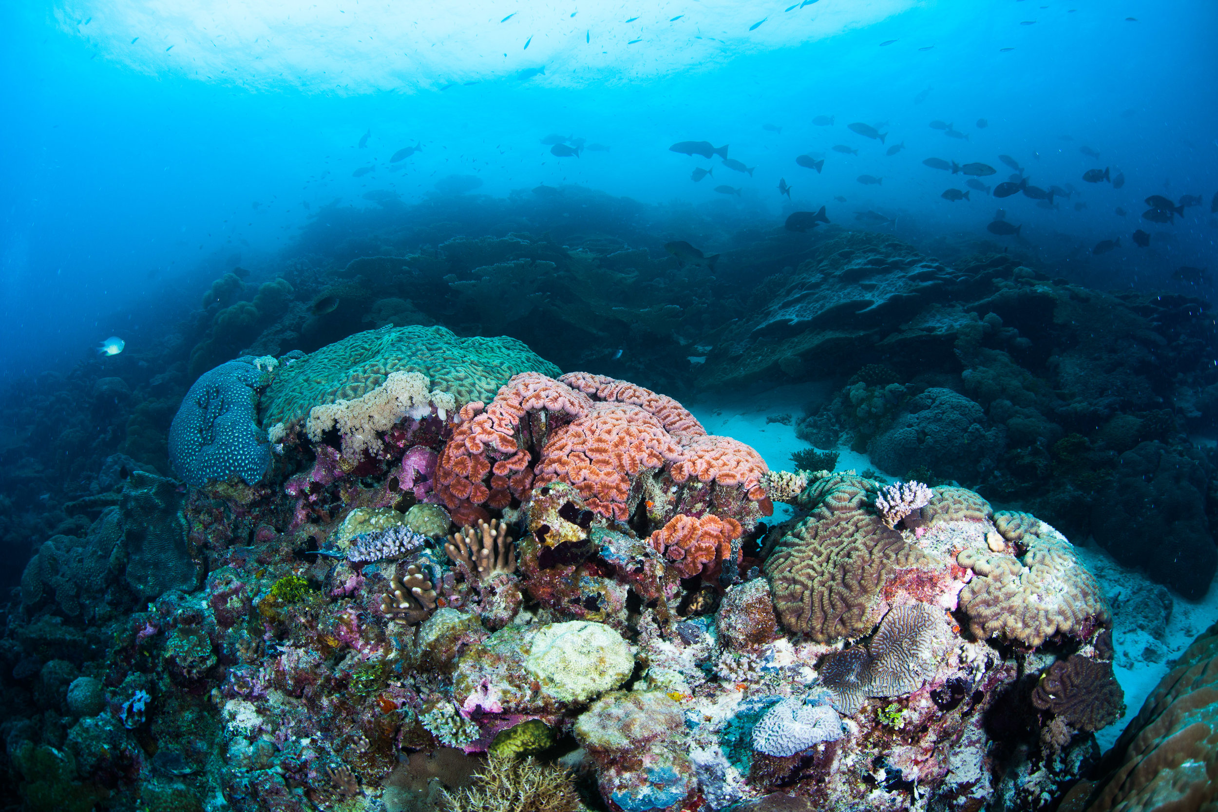 A stunning coral reef in the Chagos Archipelago, a perfect backdrop for fieldwork misfortune. ©Christophe Balliache/The Ocean Agency