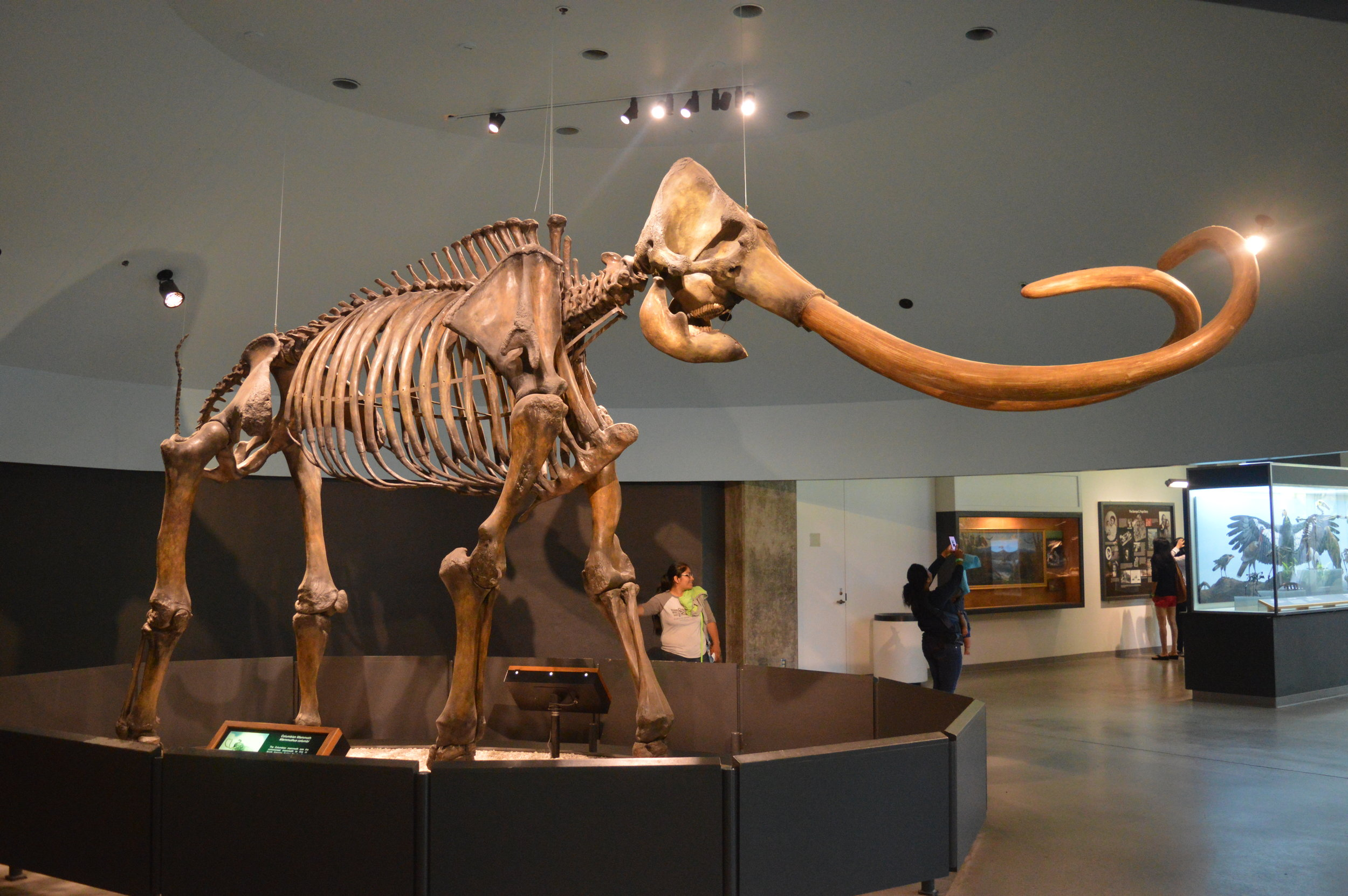 When Bill Nye tells you to visit the La Brea Tar Pits and Museum, that's exactly what you do. © Andrew Katsis