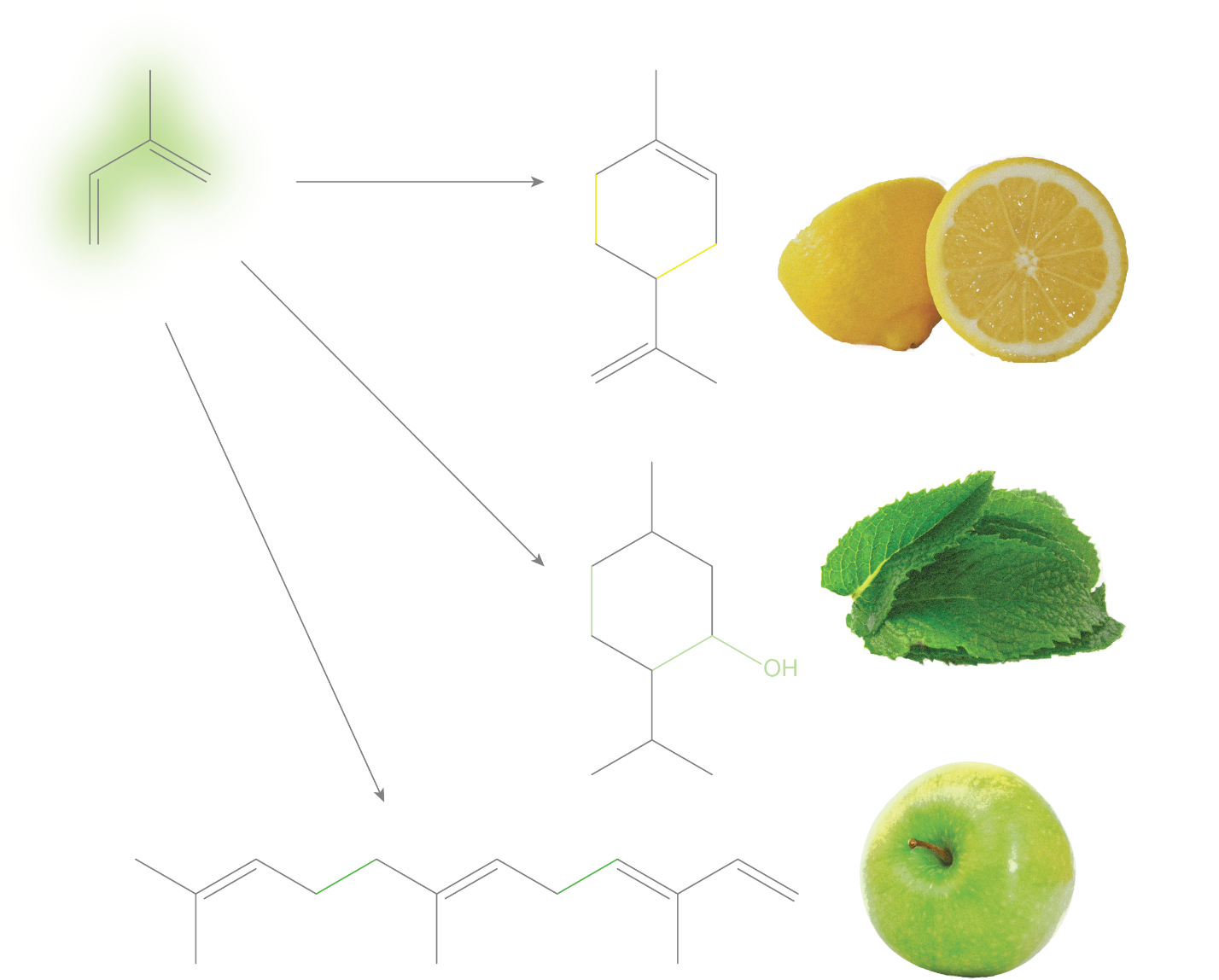 Plants can make isoprene (top left) into a huge variety of pleasantly-scented compounds including limonene (top right), menthol (middle), and farnesene (bottom). Produced by the author using images by   Abhijit Tembhekar/Wikimedia Commons (CC-BY-2.0)  ,   Darya Pino/Flickr (CC-BY-2.0)   and   Pixabay (CC0)  .