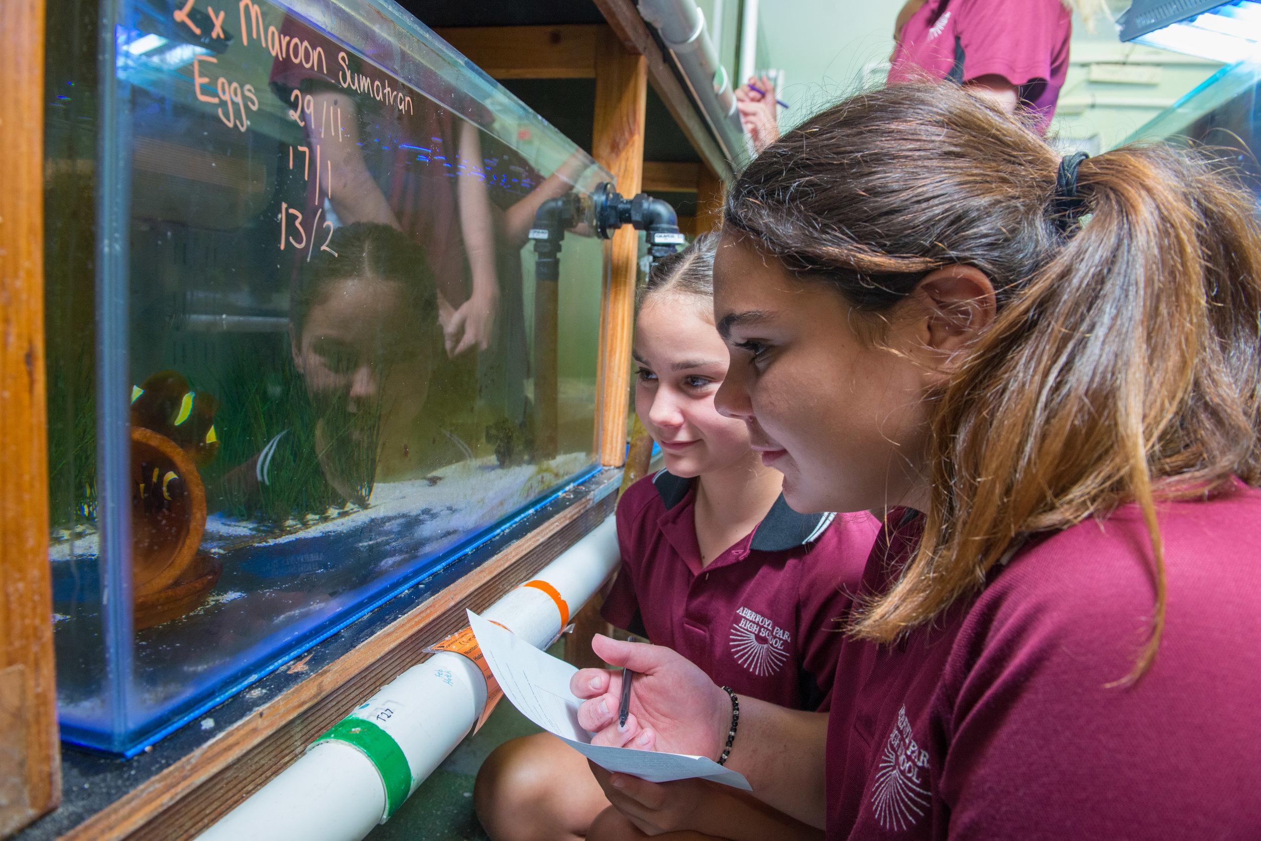 Saving Nemo involves Australian schoolkids in the captive breeding of reef fish.  © Saving Nemo