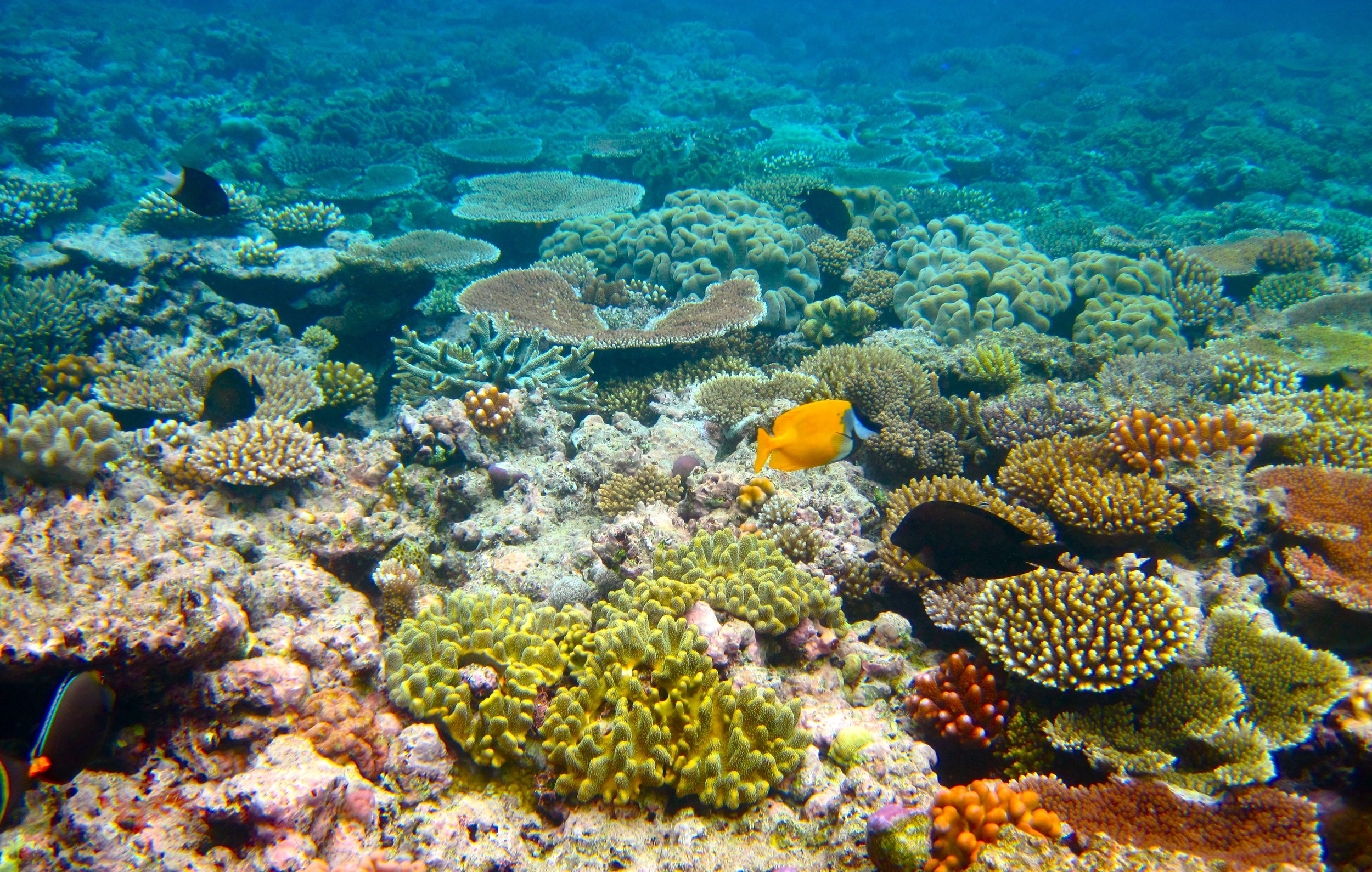 Coral reefs are some of the most colourful environments on the planet.   Kyle Taylor/Flickr  (CC BY 2.0)