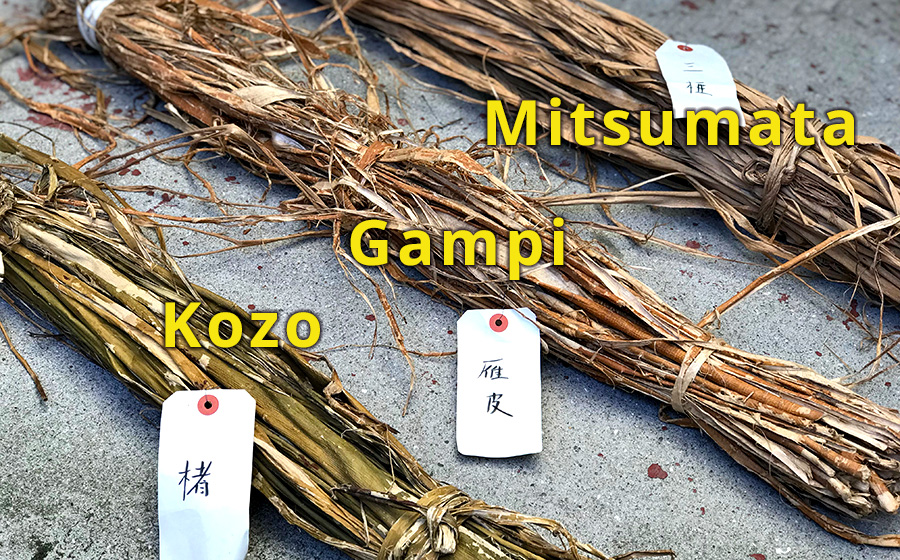 Kozo, Gampi, and Mitsumata are the most popular materials for making Washi paper. They all have different characteristics.