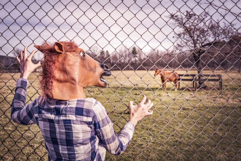 horses and self-doubt