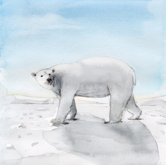 Bear_watercolorpencil_0909.jpg