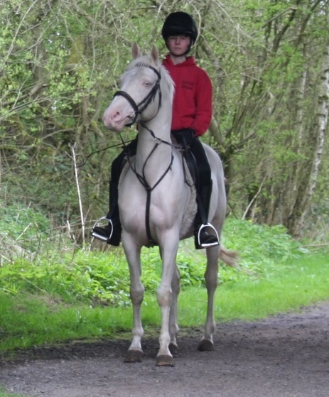 In his 3rd week under saddle