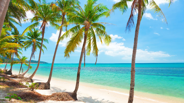 The Palm fringed, golden beaches of Koh Samui – Credit: Shutterstock