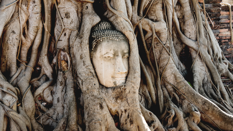 The Buddha Head at Ayutthaya – Credit: Shutterstock