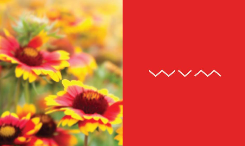 WildflowerVM_Brand