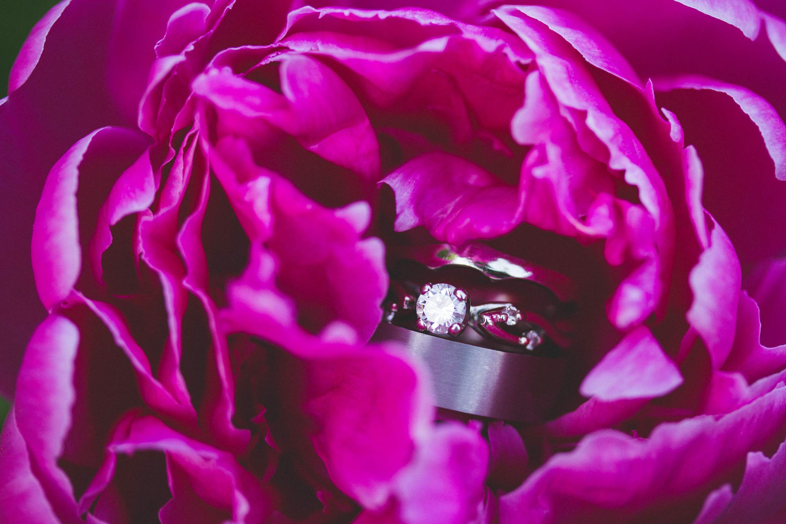 Wedding rings at Bliss Farm in Granville, Massachusetts. Sweet Alice Photography.
