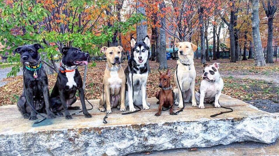 dogs on rock.jpg