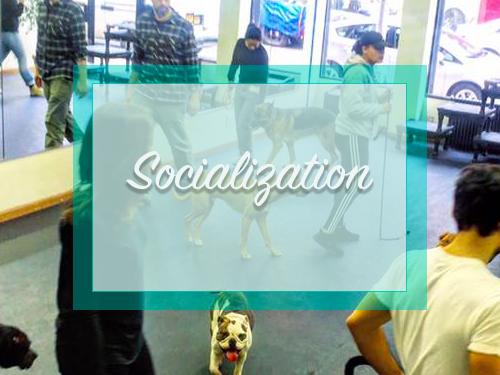 Socialization Classes
