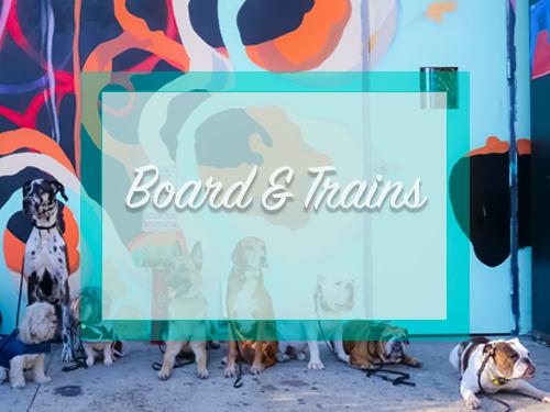 Board and Train Programs