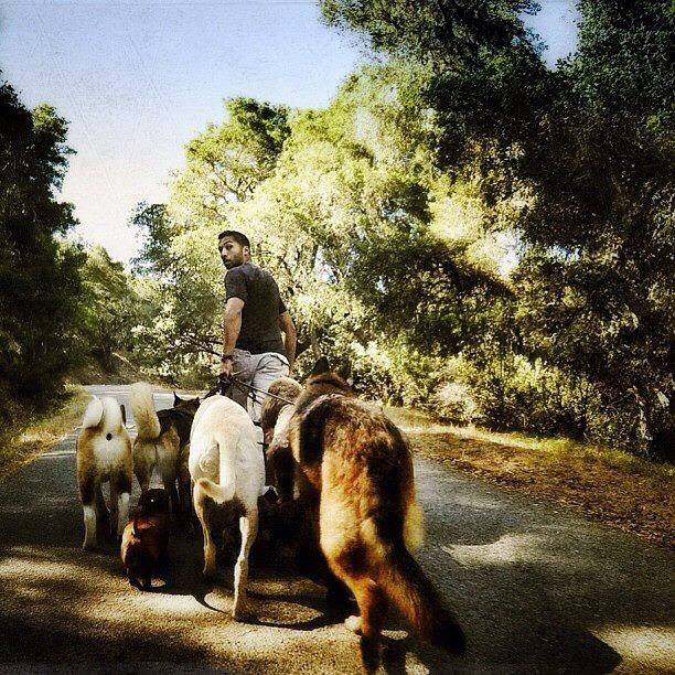 blake walking dogs.jpg