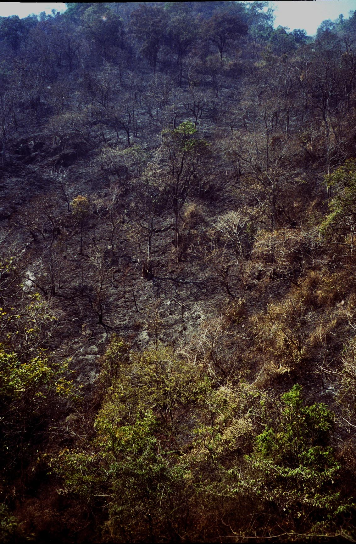 Burma_Countryside.jpg