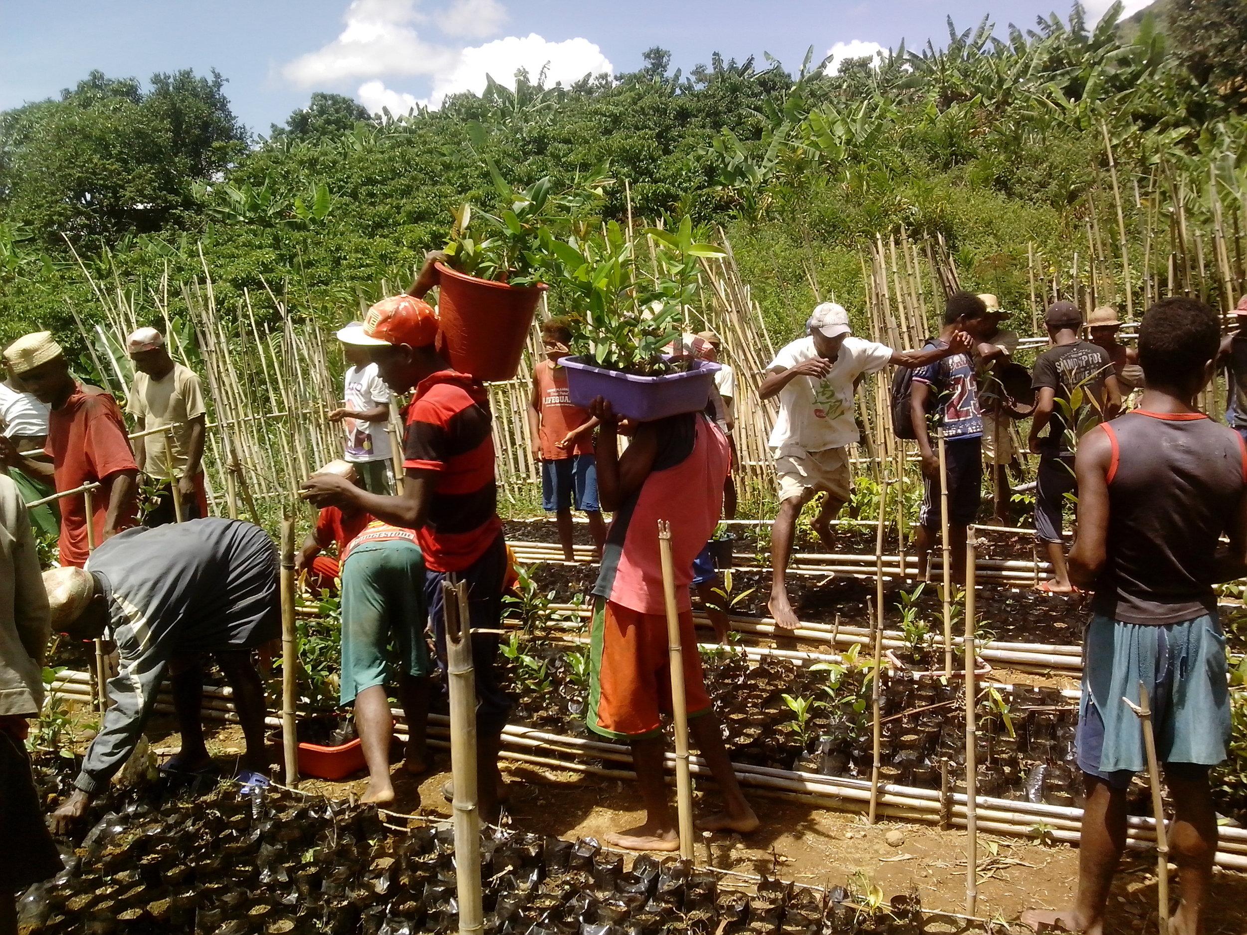 Reforestation 3.jpg