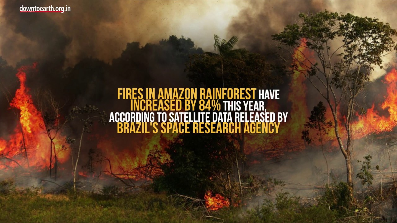amazon rainforest 4.jpg