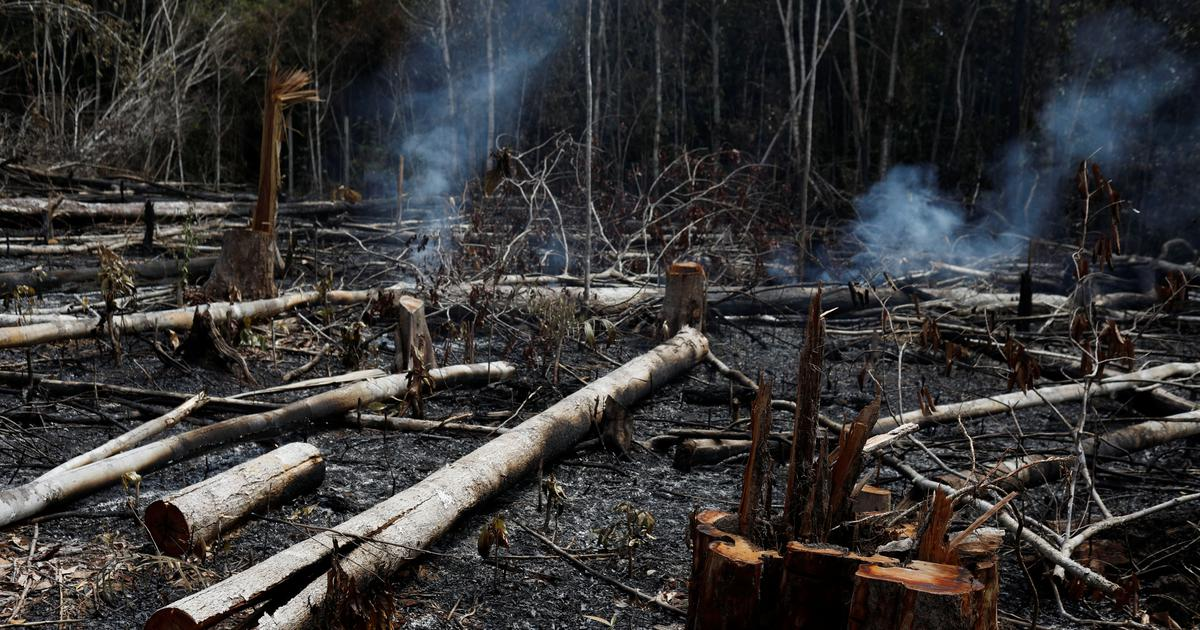 THOUGHTS: AMAZON RAINFOREST FIRES -