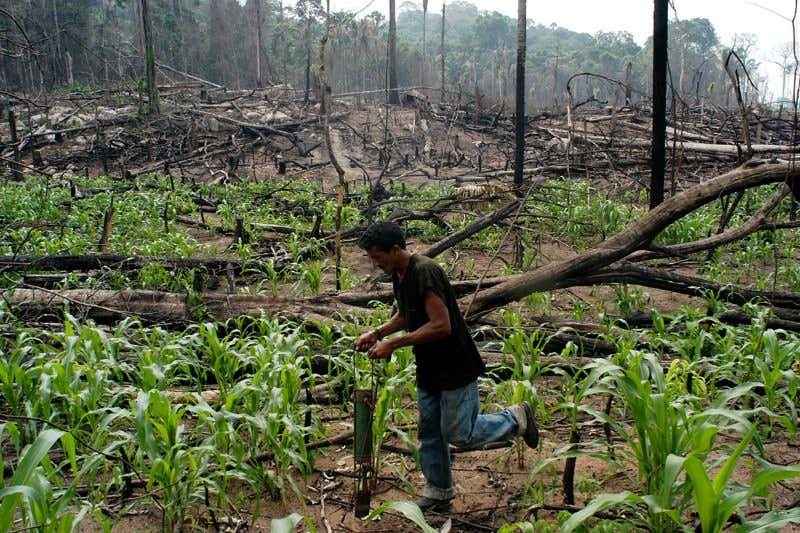 AMAZON RAINFOREST FIRES -