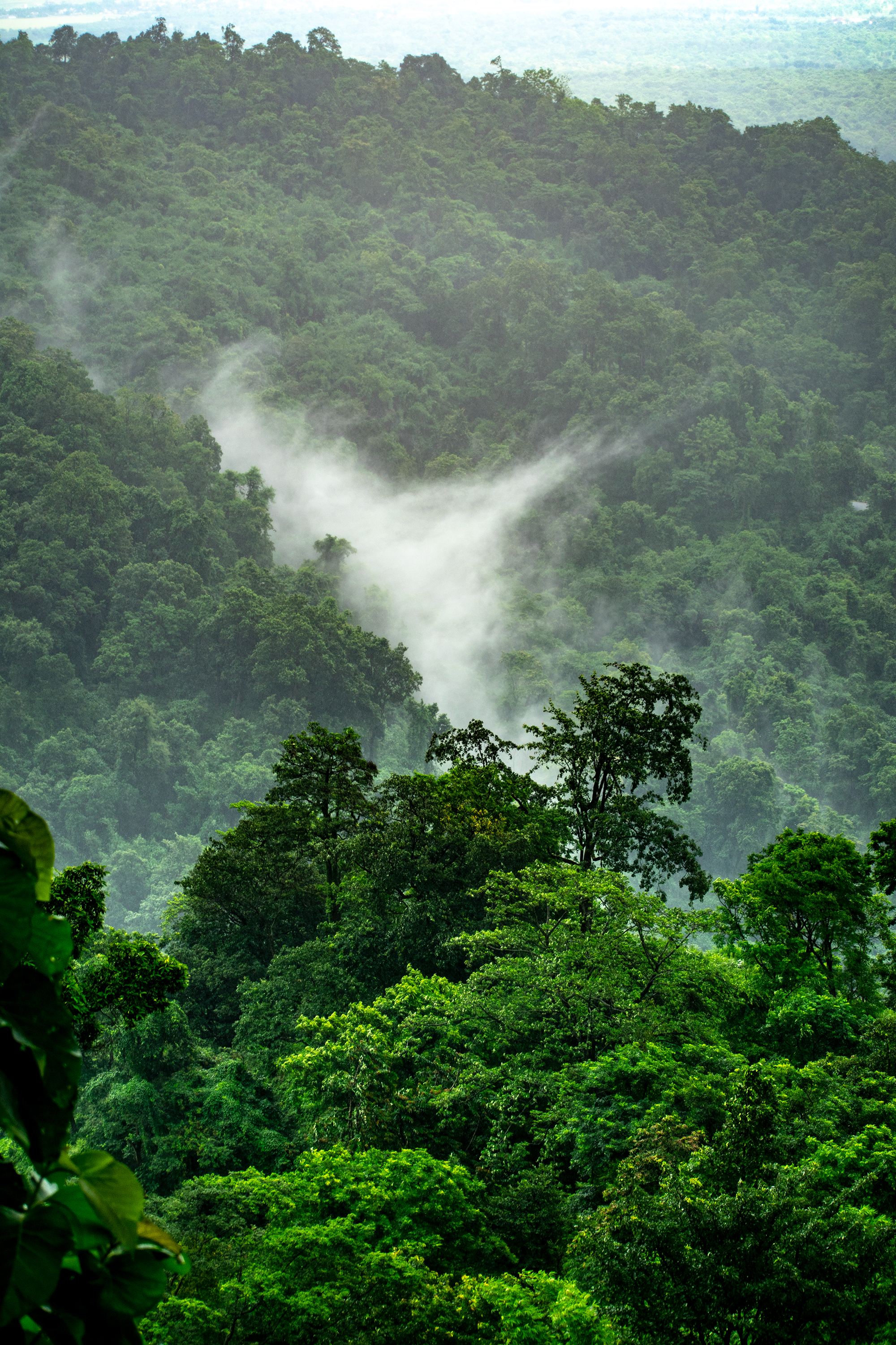 THE AMAZON IS THE LARGEST RAINFOREST -