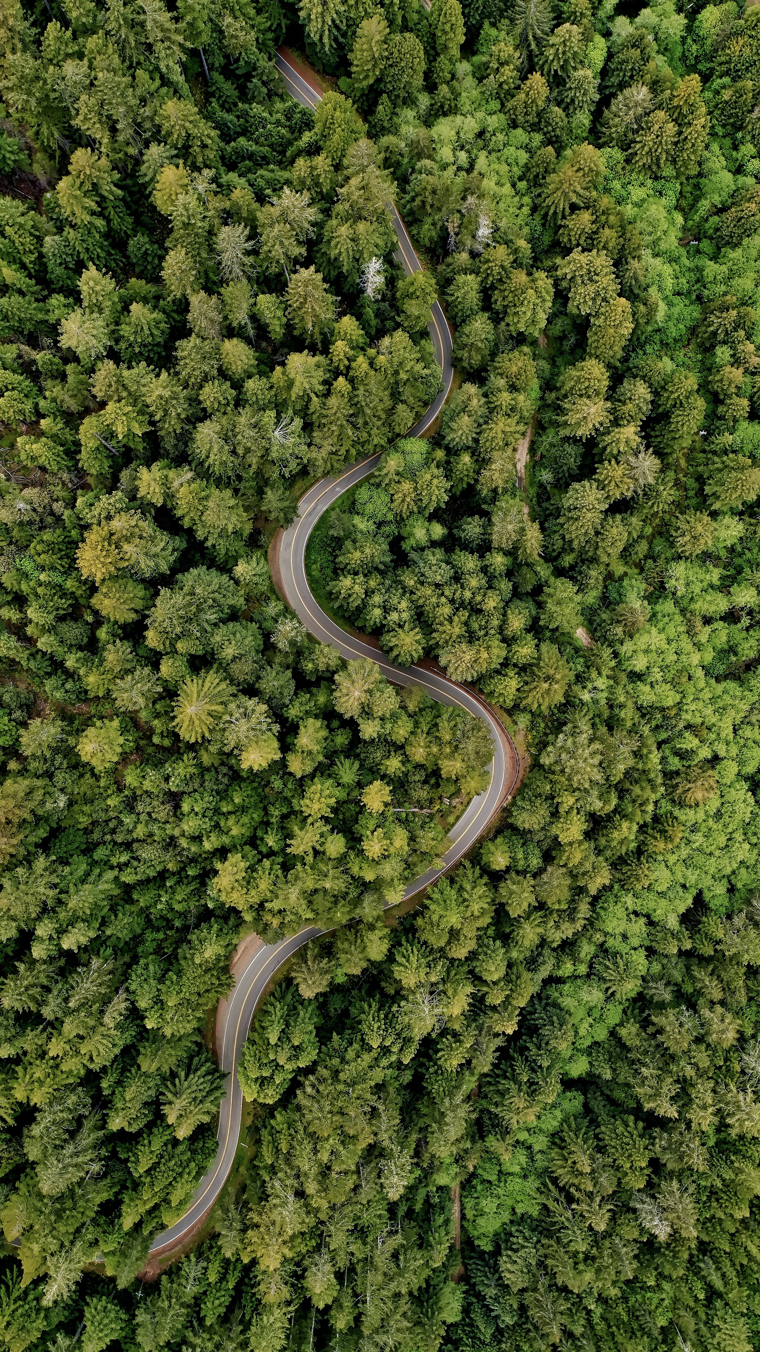 RAINFORESTS STORE CARBON AND DRASTICALLY SLOW CLIMATE CHANGE -