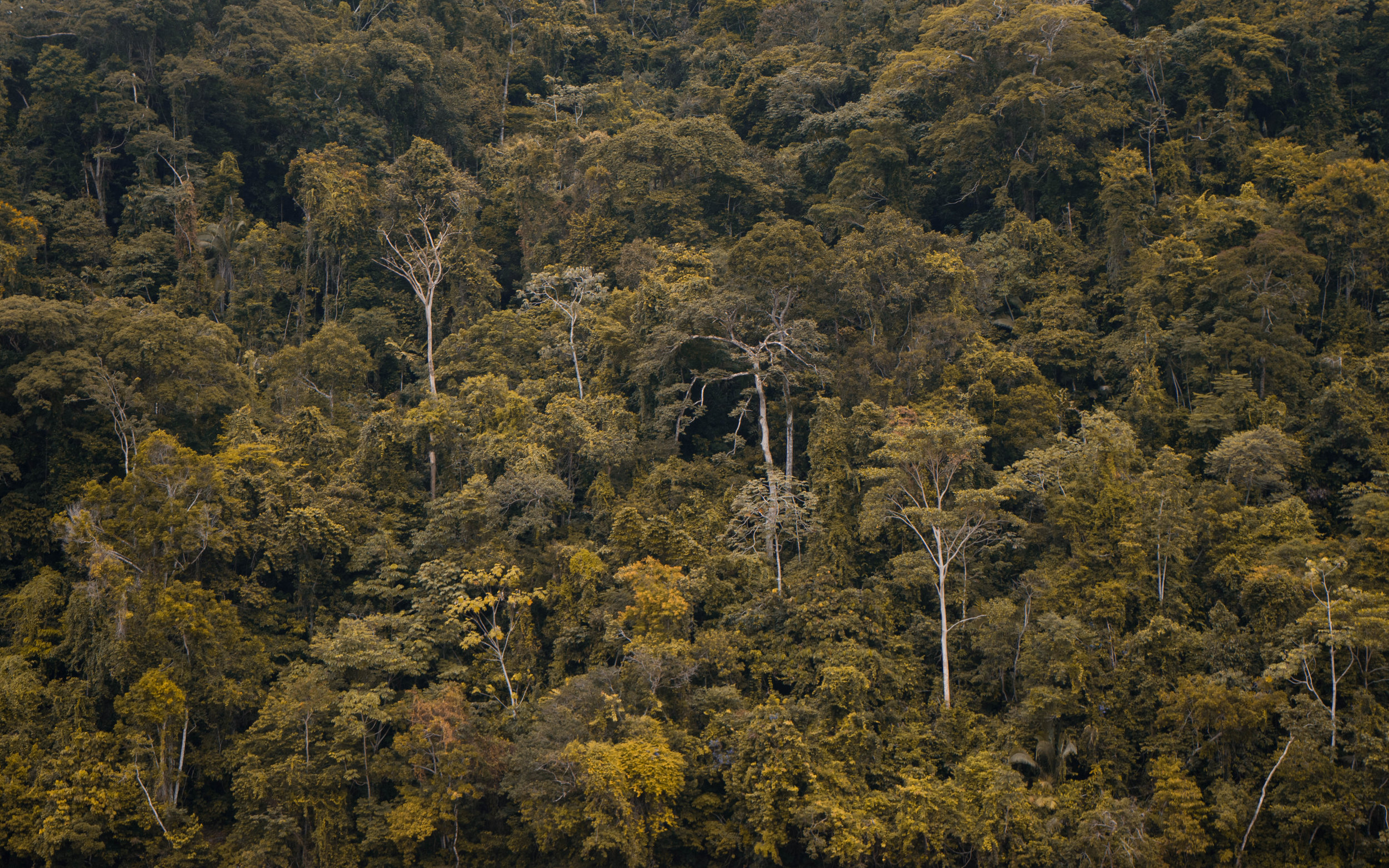 RAINFORESTS PROVIDE GLOBAL OXYGEN - THEY ARE EARTHS LUNGS -