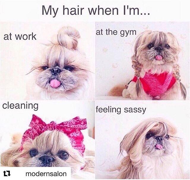 #Repost @modernsalon with @get_repost ・・・ A new look regardless of the occasion 🐶💁🏻♀️ @catknowshair • • • #modernsalon #hairmeme #lifeofahairstylist #hairdresser #beautymeme #lifeofahairdresser #hairstylistmemes