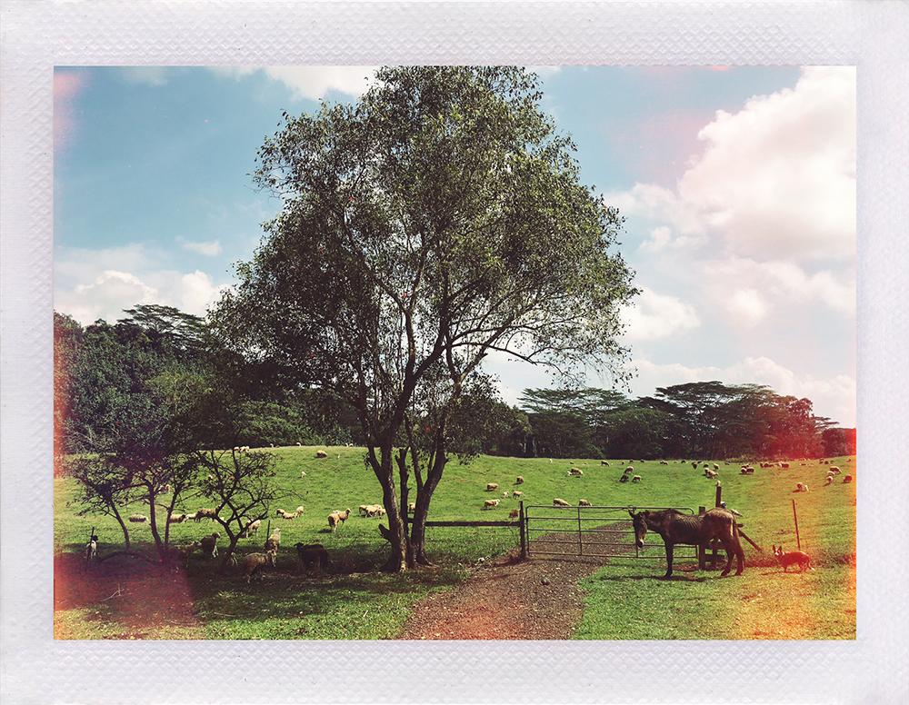 Oma'o Ranch Lands, Koloa, Kaua'i