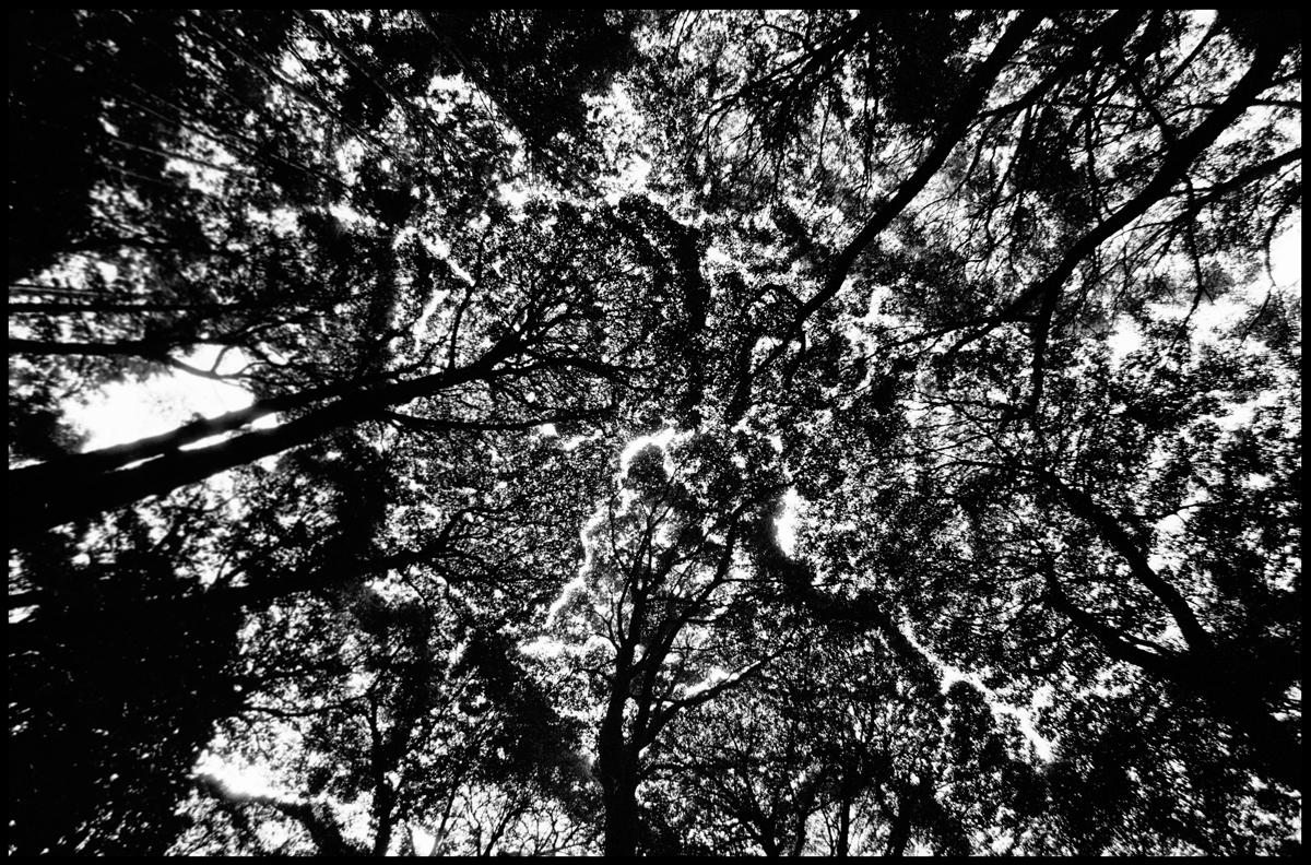 2.Tree.jpg