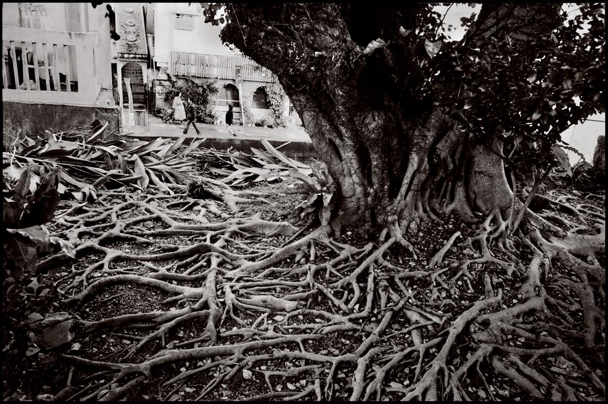 6.Tree.jpg